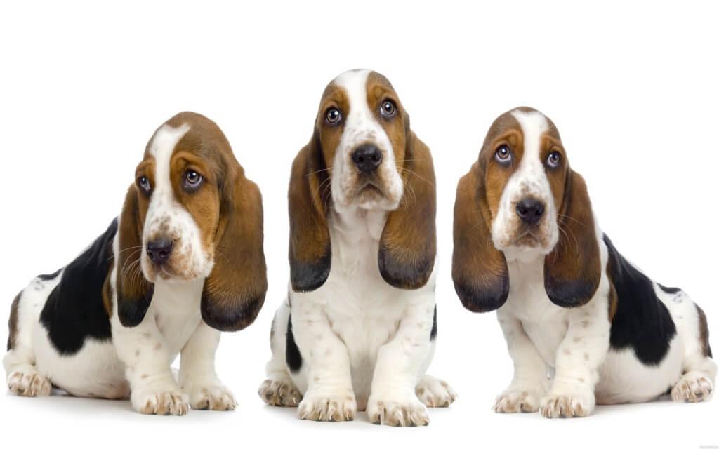 юрюридический кейс про 3х собак